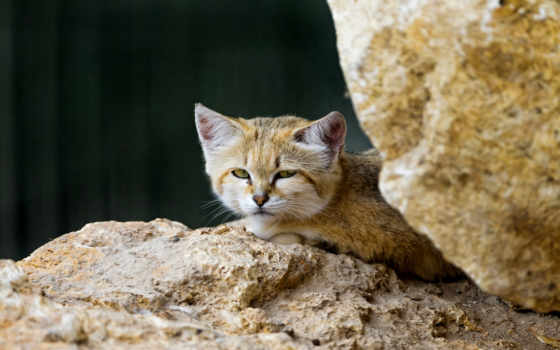 flickr, кот, gato