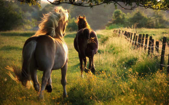 caballos, run, caballo, лошадь, лошади, галоп, summer, кони,