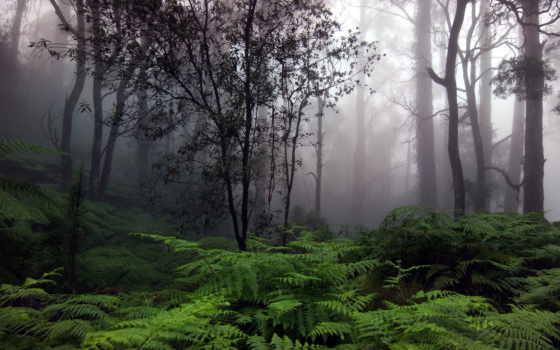 фотографии, природа, красот