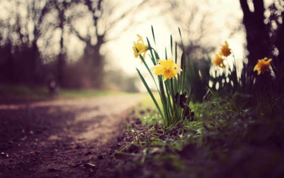 цветы, трава, природа