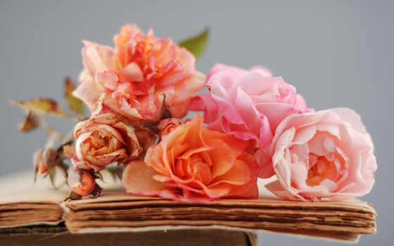 цветы, розы, книга