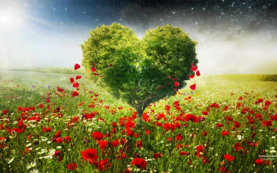 love, ромашки, маки