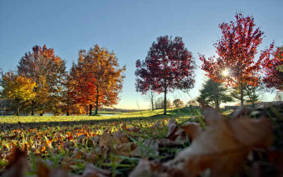 otoño, rboles, imágenes, hojas, otoñales, fondos, facebook, groups, www,