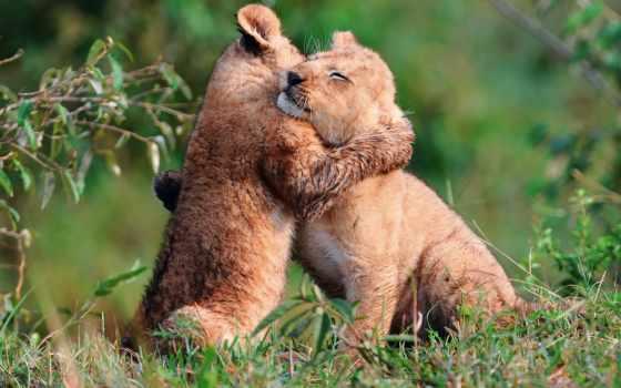 facts, обнимашки, animal, меньших, наших, братьев, fun, означает, объятие, детёныш,