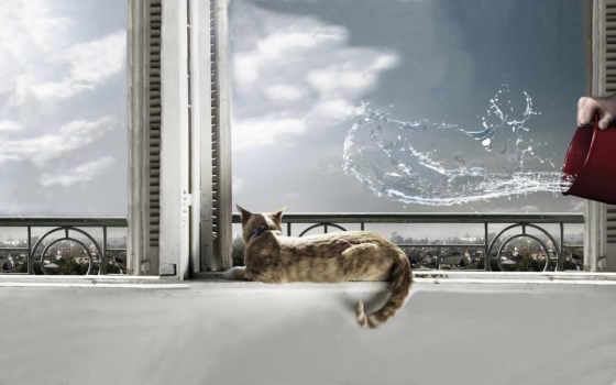кот, вода