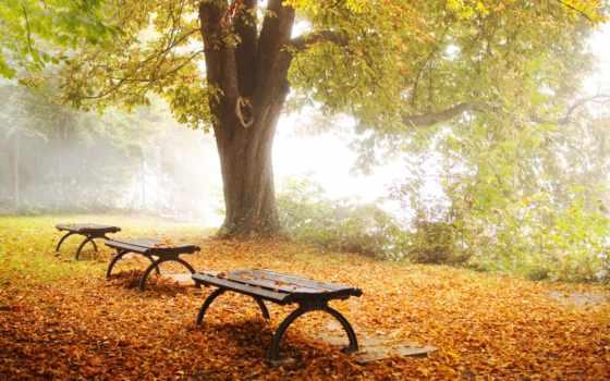 осень, парк Фон № 33698 разрешение 1920x1200