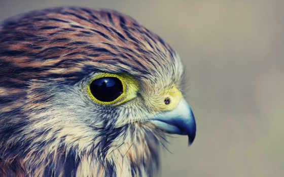 орел, профиль, птица