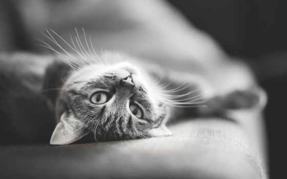 кошки, кот, коты Фон № 55364 разрешение 1920x1200