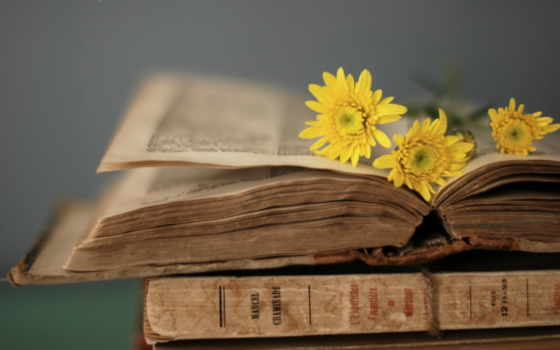 книга, страницы, цветы