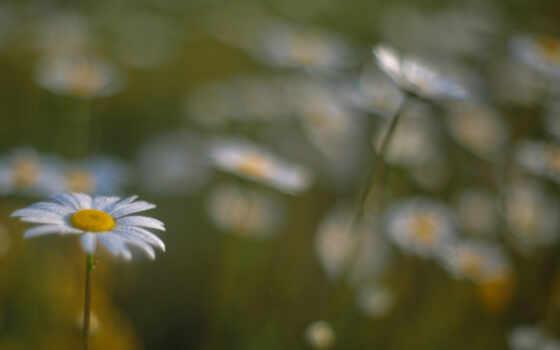 цветы, подборка, subject