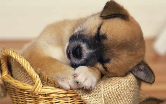 perros, noches, buenas, para, las, peluquería, les, publicada, wuawash, todos,