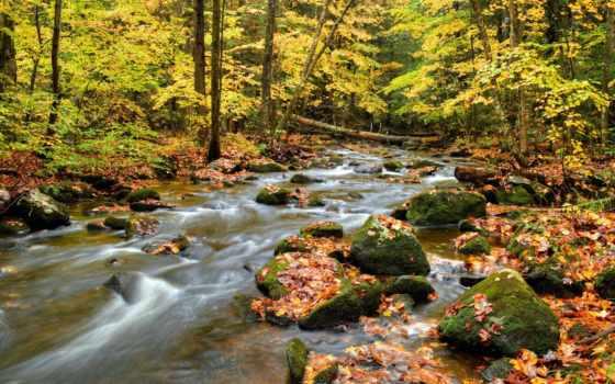 природа, лес, trees, фотообои, камень, цветы, мм, water, зелёный, ручей, фотопанно,