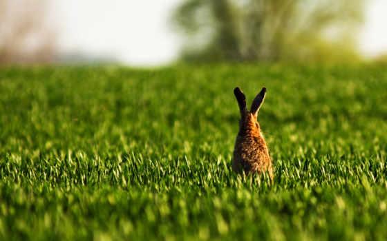 кролик, cute,