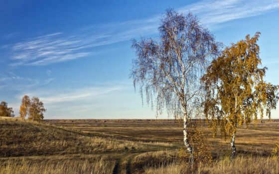 fukei, природа, небо, степ, поле, береза, высокого, качества,
