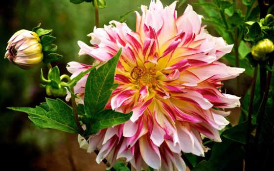 Цветы 20068