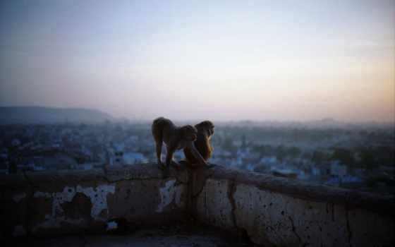 обезьяны, monkeys Фон № 26860 разрешение 1920x1200