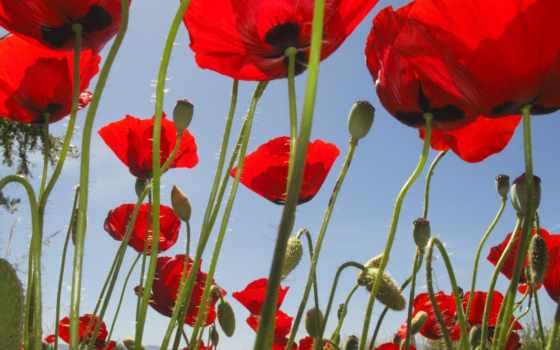 hoa, цветы, anh