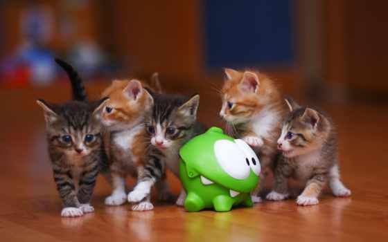 котята, коты, милые, кошки, злые, дек, котенок, звери, zhivotnye, toad,