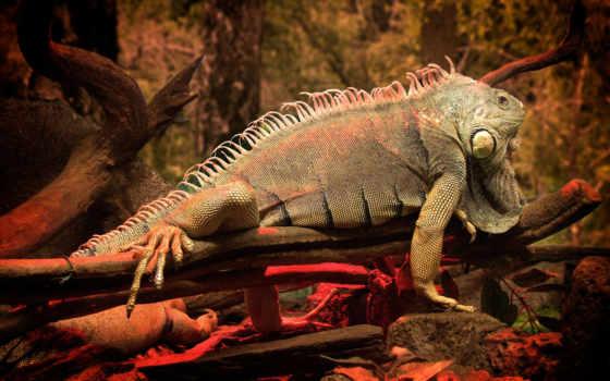 iguana, reptile, zhivotnye, дереве, ящер,