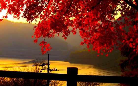листья, река