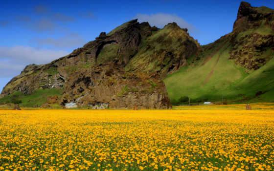 горы, цветы, небо, поле, долина, одуванчики, желтые, spring, amazing, flowers, photos, nature, scenes,