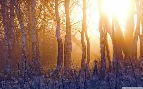 весна, восход, ранняя, березки, красиво, плантация, березы,