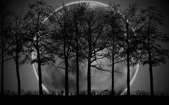 лес, dark, black, white, луна, desktop,