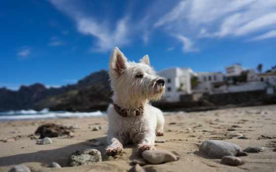 собака, дружелюбный, су, размещение, pet, welsh, corgi, cvety, dogs, batis,