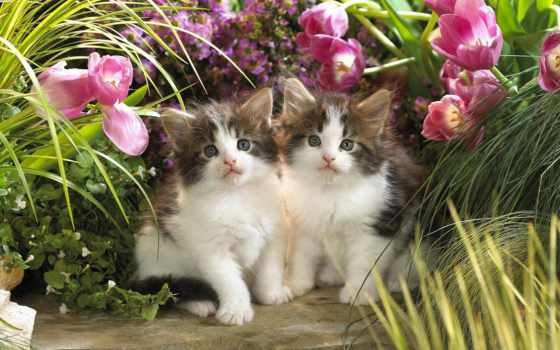 zhivotnye, кошки, котята, cvety, природа, full,