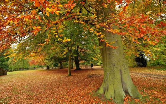 обои, природа, листья, осень, деревья,