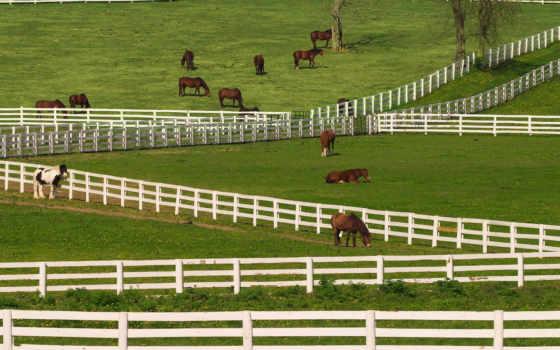 kentucky, horses