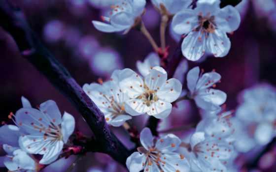 spring, blossoms