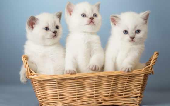 кошки, самые, котята