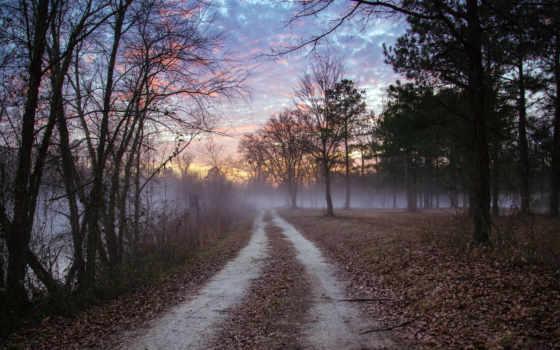 лес, дорога, trees