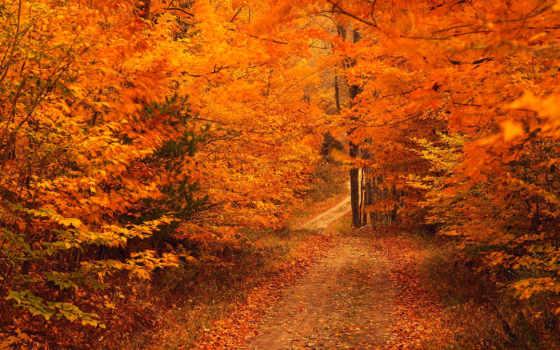 new, осень, jersey, англия, озеро, princeton, great,