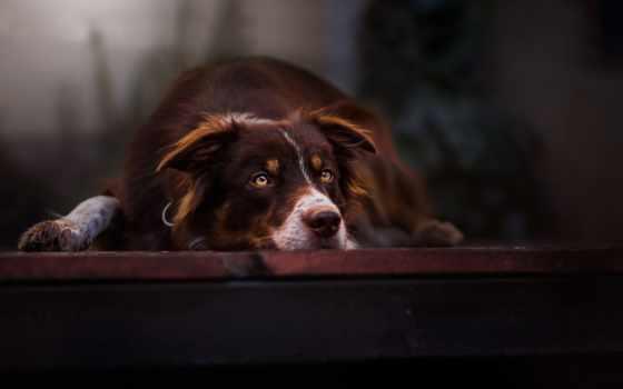 милые, релевантность, собаки