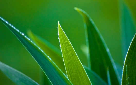 aloe, vera, pinterest, randomwallpaper, free, pin, листва, pins,