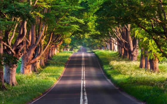 дерево, дорогой, пожаловаться, природа, добавить