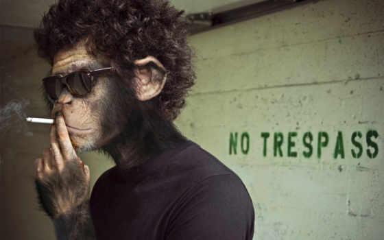 сигарета, обезьяна