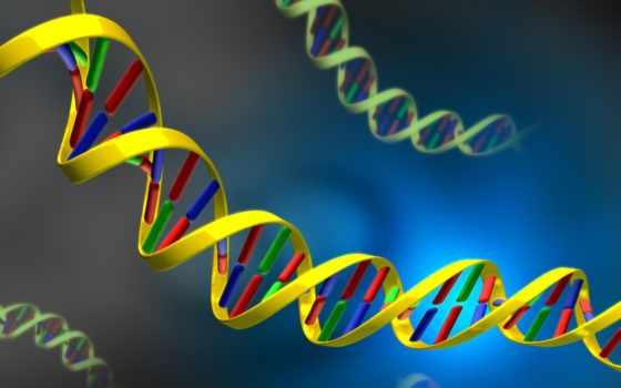 dna, acid, nucleic, картинка, illustration, bilder, смотрите,