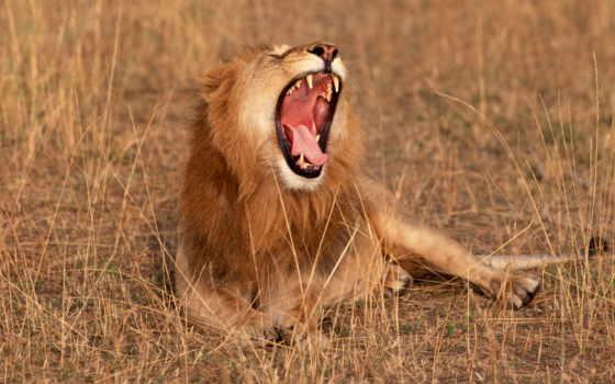 саванна, африка, животные