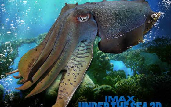 под, море, ocean