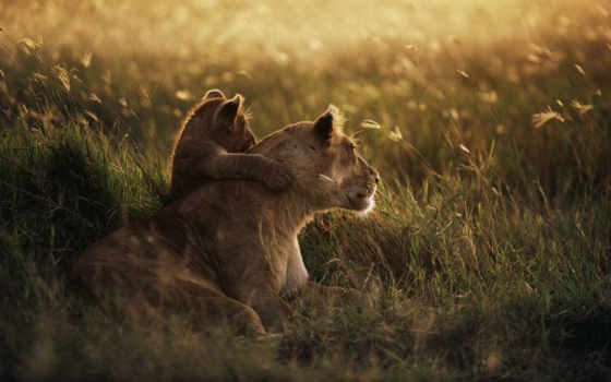 national, park, serengeti
