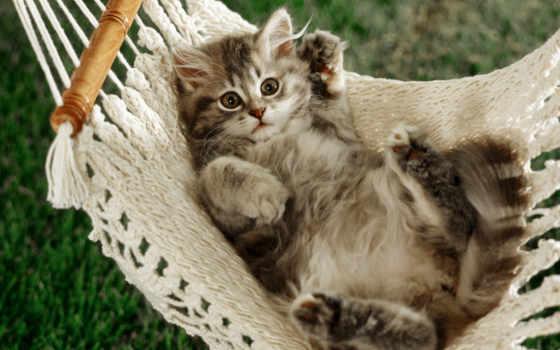 красивые, кошки, смешные