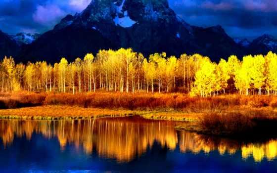 осень, yellow, природа, года, rally,