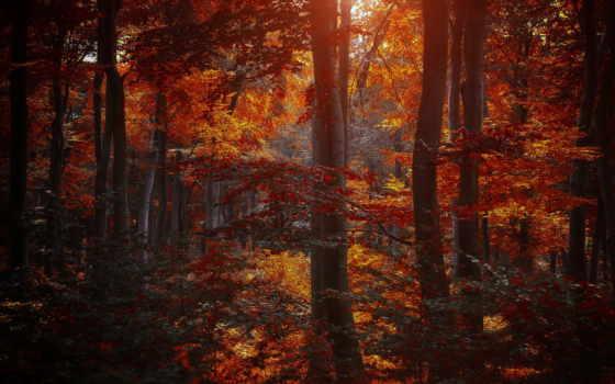 бордовые, листва, осень, trees, лес, желтые, природа, багровые,