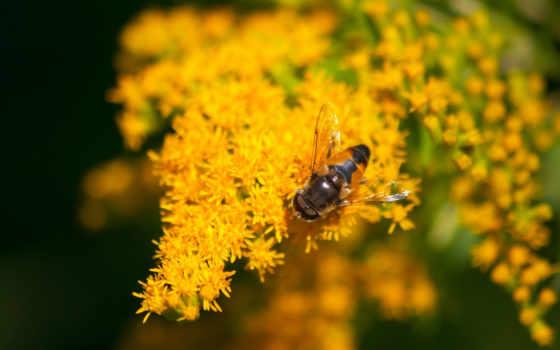 пчелка, мед, правило