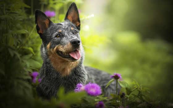 собака, природа, овчарка, листва, взгляд, drawing, морда, animal, cvety
