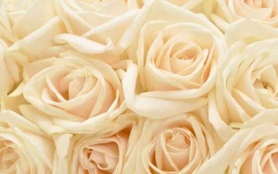 фотообои, роза, магазин, цена, арта, цветы, интернет, сюжет