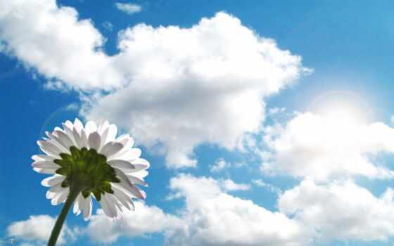 лето цветок небо